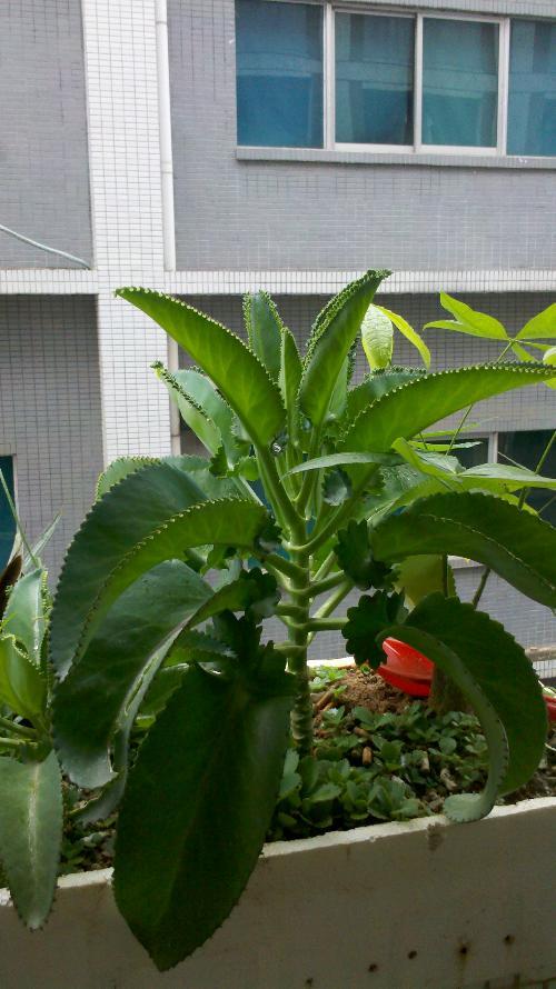 大叶植物盆栽线描