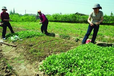 种地_陕西的这个小村庄,农民不种地,靠着石头发家致富,城里