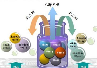 免疫系统中的b淋巴细胞分泌出一种特异的免疫球蛋白g