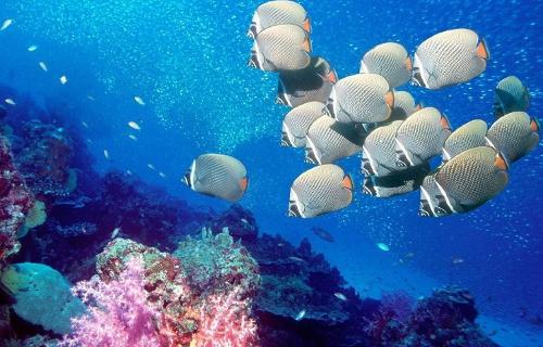 100种海洋动物简笔画大全 第38页 简笔画图片大全图片