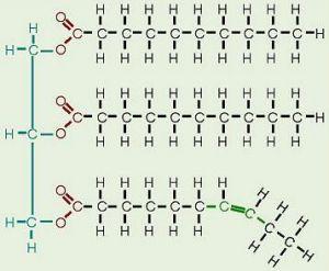 n3不饱和脂肪酸