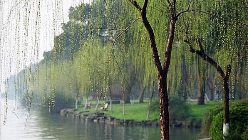 钱塘湖春行