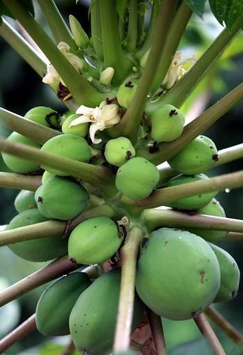 海南岛热带灌木图片