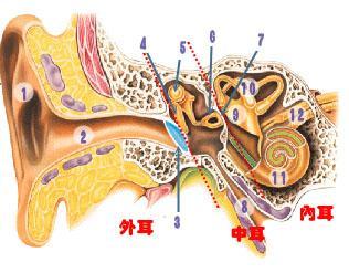 鼓室内气压与外界气压达到平衡,耳症状消失,继续上升时上述现象可周期图片