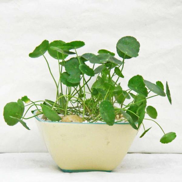 如何使种子顺利发芽