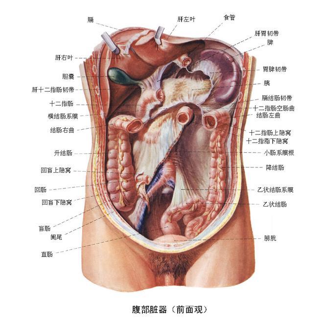 腹部闭合性损伤