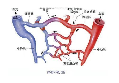 微循环障碍会起这些疾病: 神经系统:脑部发生供血不足,脑细胞得不到