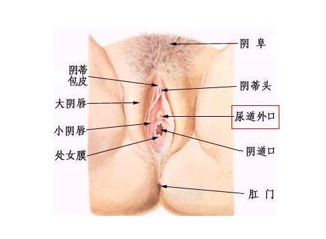 男性霉菌性感染有什么症状