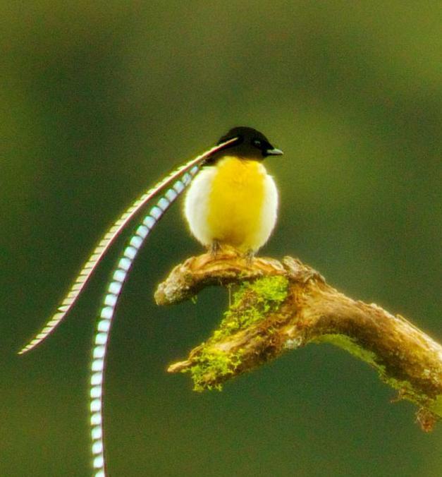 很可爱的鸟