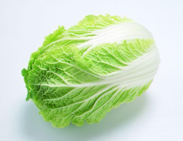 白菜细胞结构图