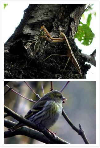 图解最简单的捕鸟方法