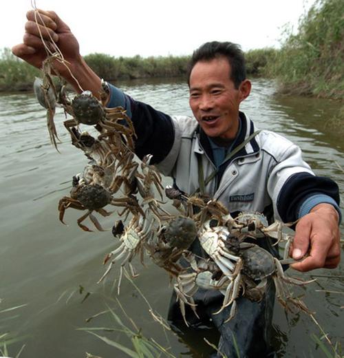 河蟹肾不好可以吃花生酱吗图片