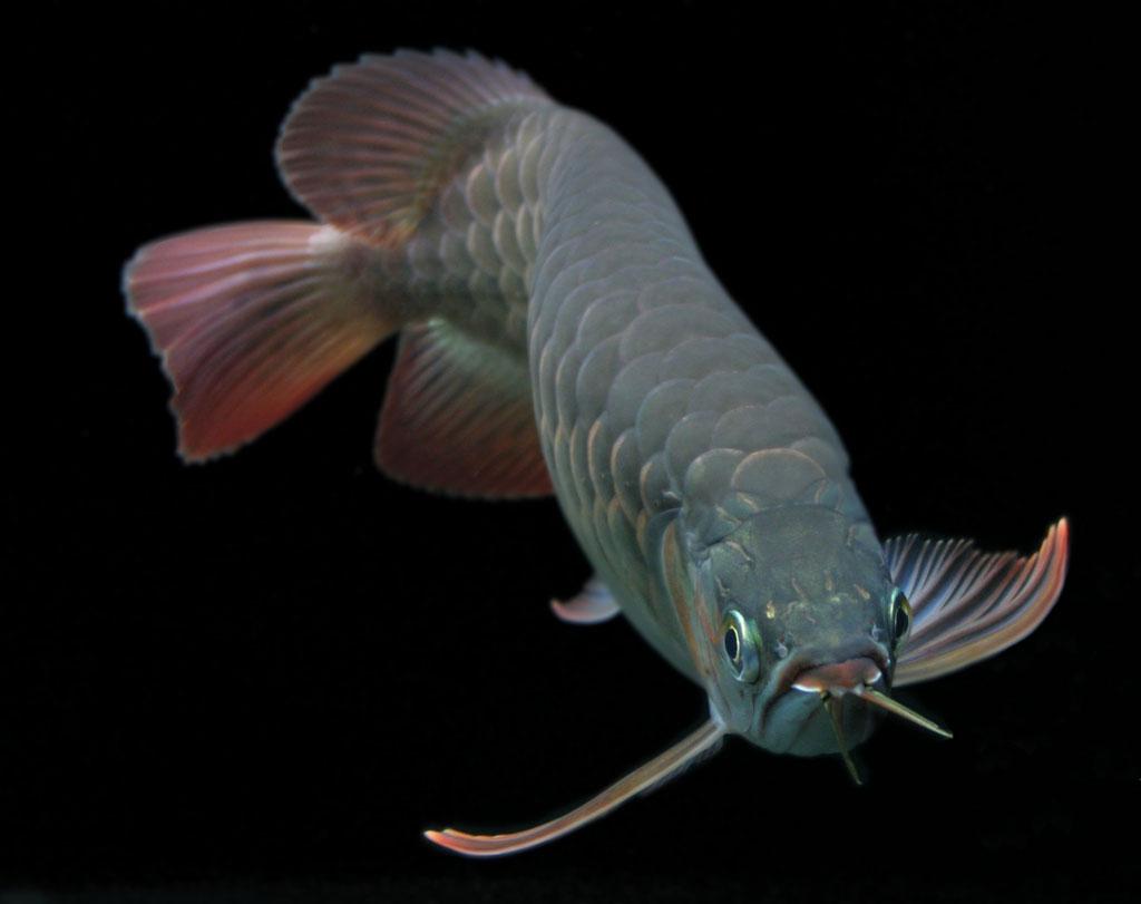 壁纸 动物 鱼 鱼类 1024_811