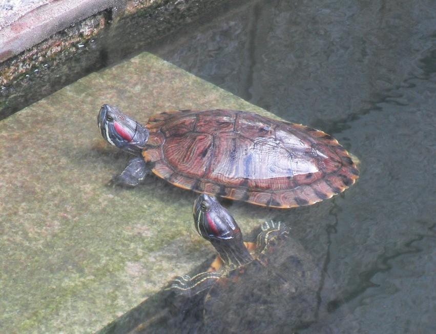 木工制作乌龟步骤图