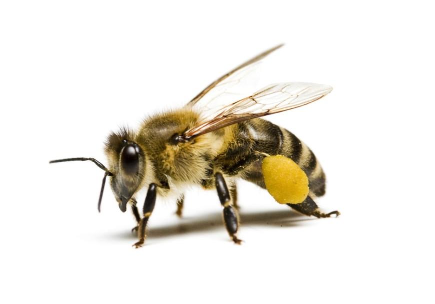 蜜蜂简单手绘图