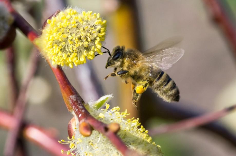 衍纸蜜蜂教程图解