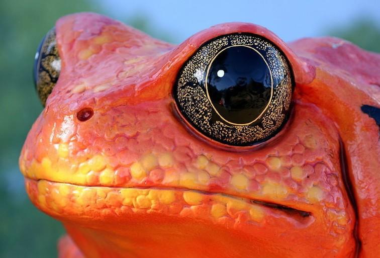 胀气青蛙折纸步骤图