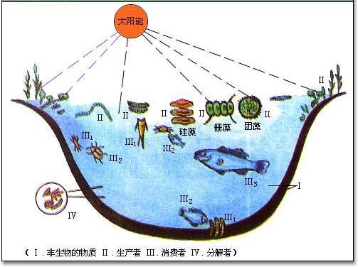 池塘生态系统图