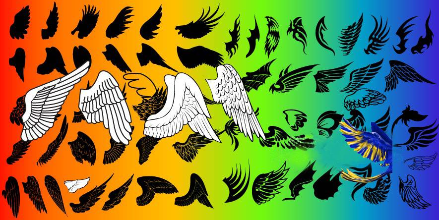 鸟的翅膀是飞行的基本结构.翅膀外面覆盖硬羽,其特性适于飞行.