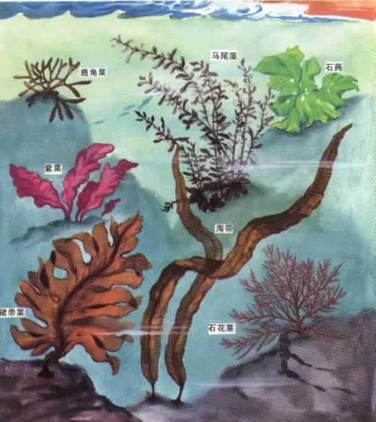 海藻细胞手绘图