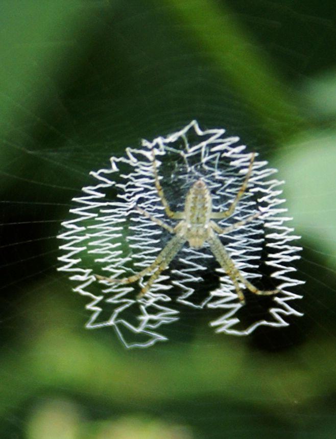 小小蜘蛛钢琴简谱