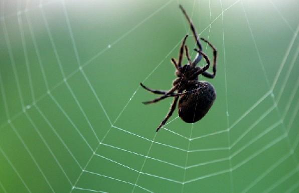 昆虫结构图蜘蛛