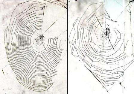 蜘蛛已经在地球上至少结了1.4亿年的网.图片