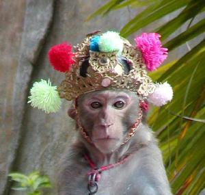 该岛是千岛湖云蒙列岛猴子王国中的一个主要猴岛,由十余翡翠的大小