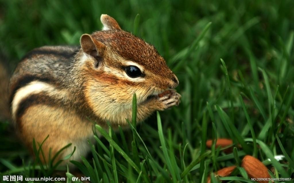 松鼠(啮齿目松鼠科动物的统称) - 搜狗百科