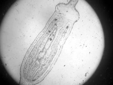 植物胚囊结构图