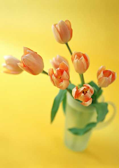 郁金香插花图片
