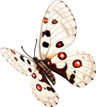 奇怪花纹的蝴蝶