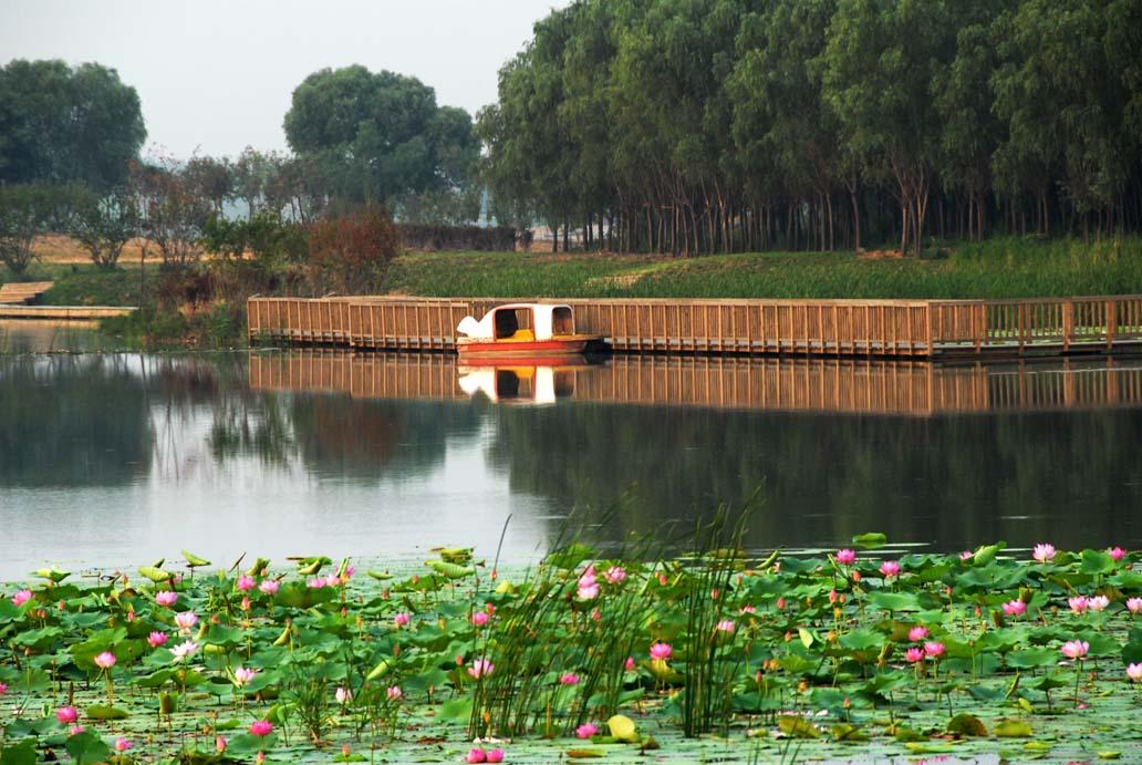 湖水,绿地, 城市森林,花草组合成了天然的生态景观,置身优美的意境中图片