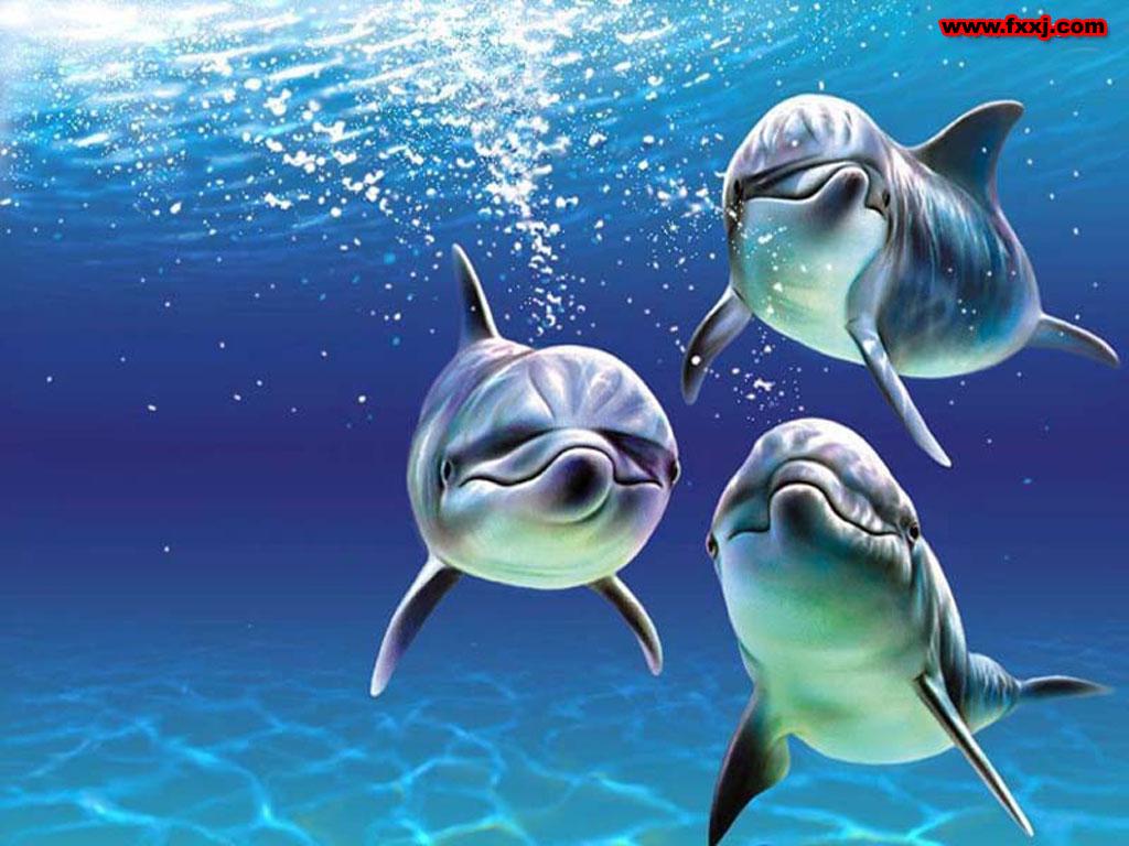 世界上最可爱的海豚