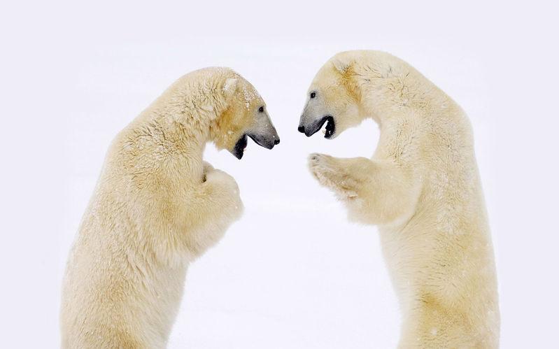 北极里的动物图片