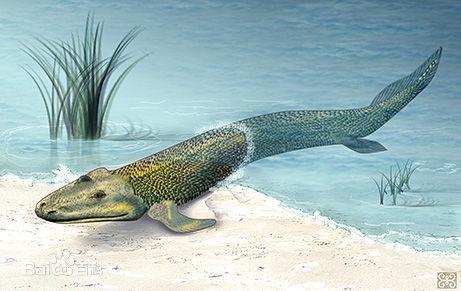 鱼图案设计生动