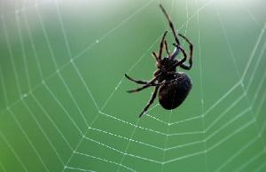 蜘蛛盟兑换需要实名吗