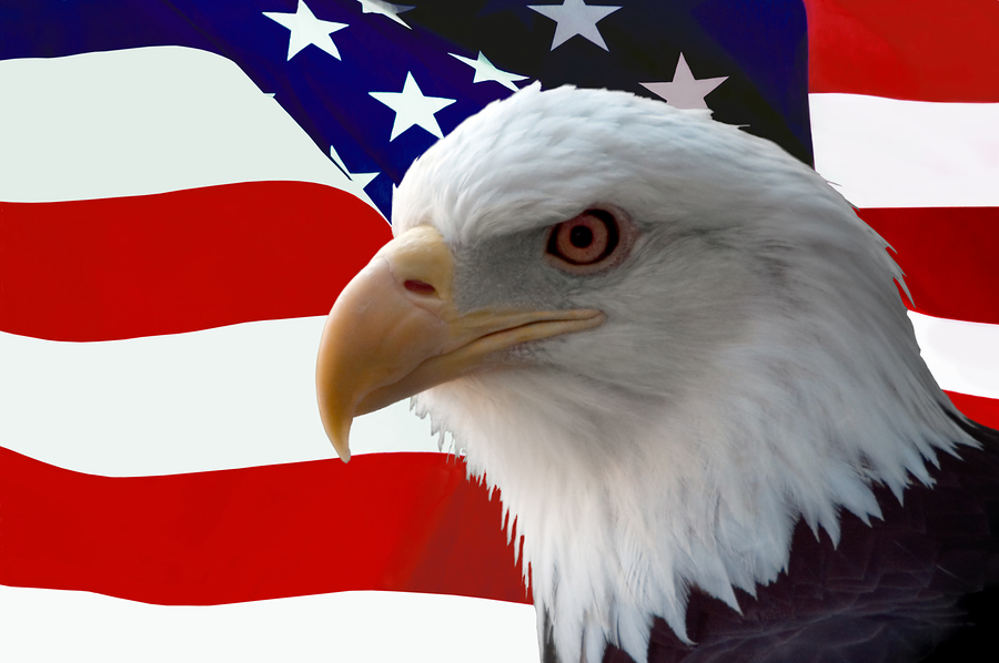 美国国旗_美国国旗与国鸟