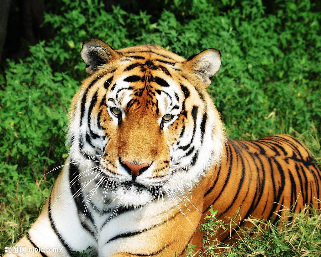【动物】世界动物百科全书_动物大全_动物百科知识_... _动物图片