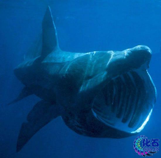 画大海里各种动物图片