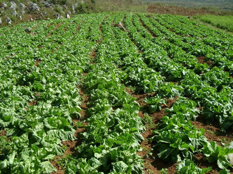 超轻土蔬菜步骤图