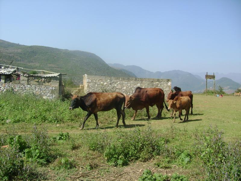农村风俗丰收田手绘