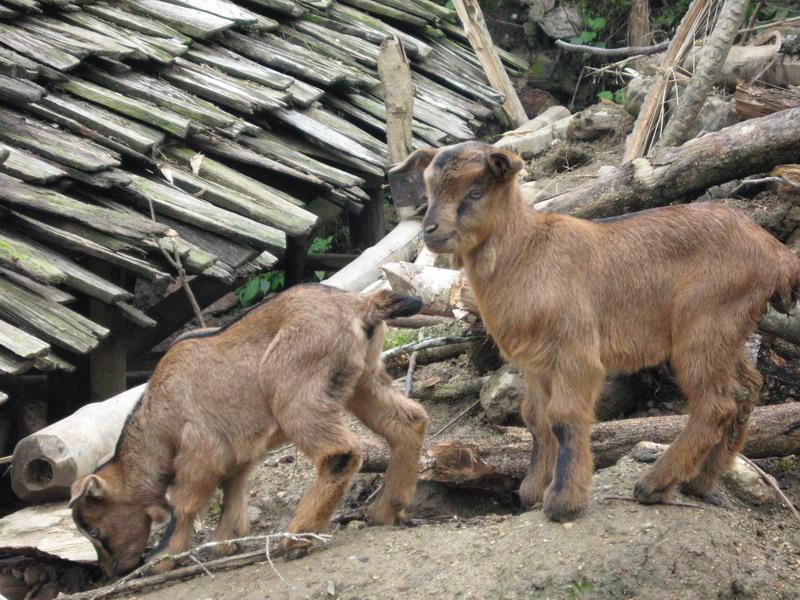 畜牧动物的高清解剖图