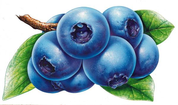 卡通蓝莓矢量图