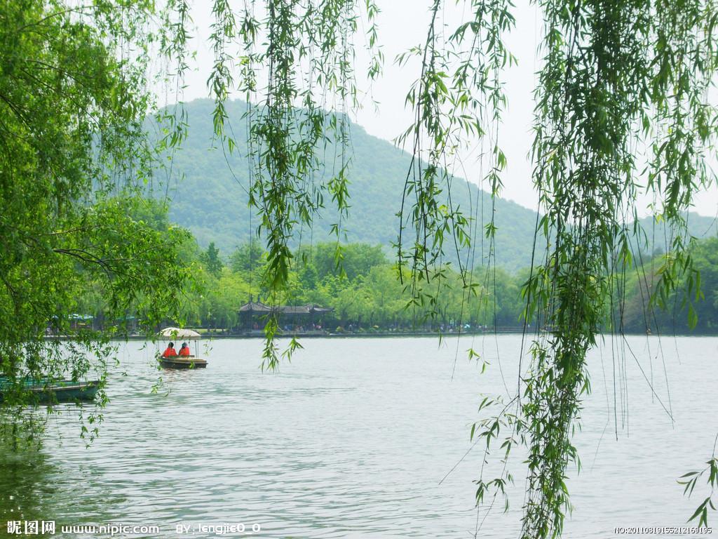 壁纸 垂柳 风景 柳树 摄影 树 桌面 1024_768