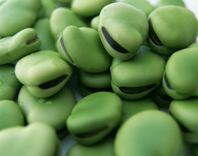 胡豆施用有机肥栽培技术