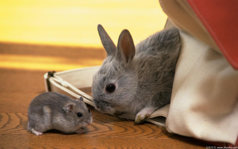 仓鼠科各种类动物基本都属中小型鼠类.毛色繁多.