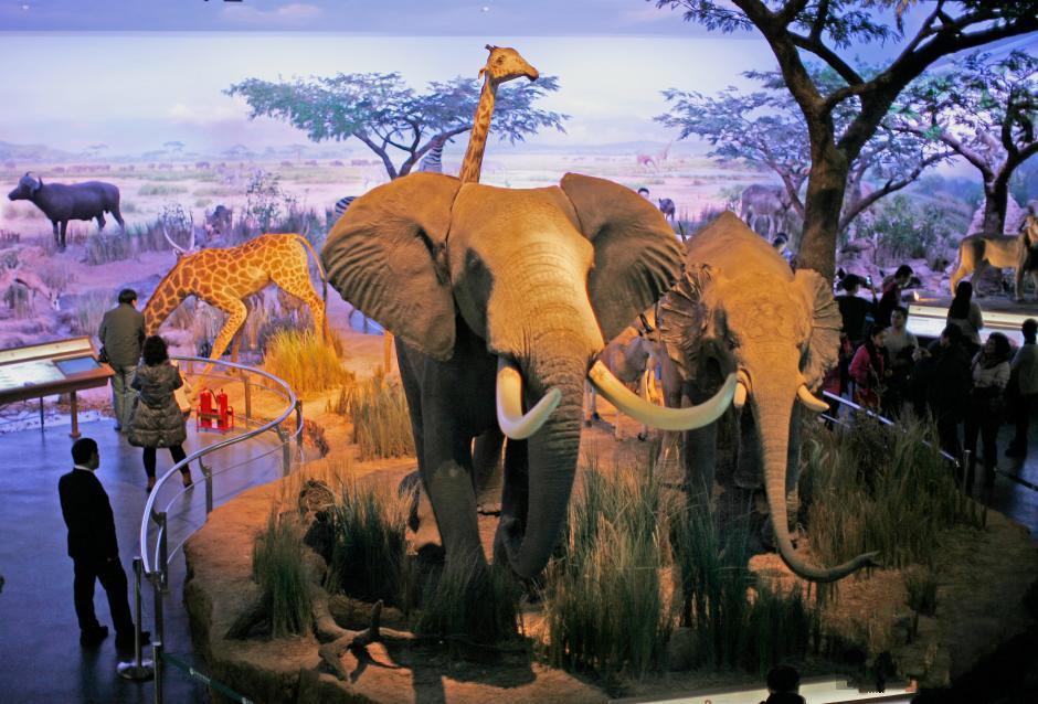 天津自然博物馆动物王国图片