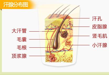 外阴大汗腺瘤