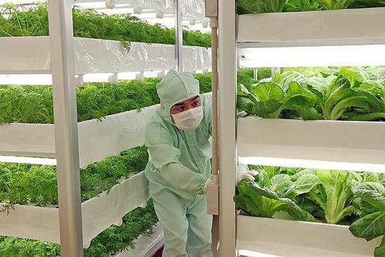 有机蔬菜种植